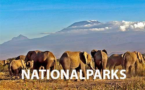 kenia safarireisen