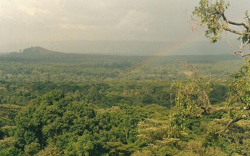 Kakamega Regenwald