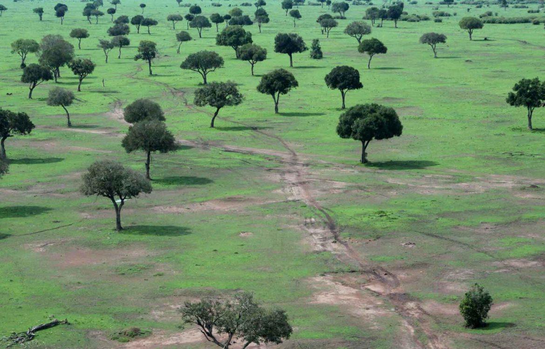 Kenia Reisen im Aufwind